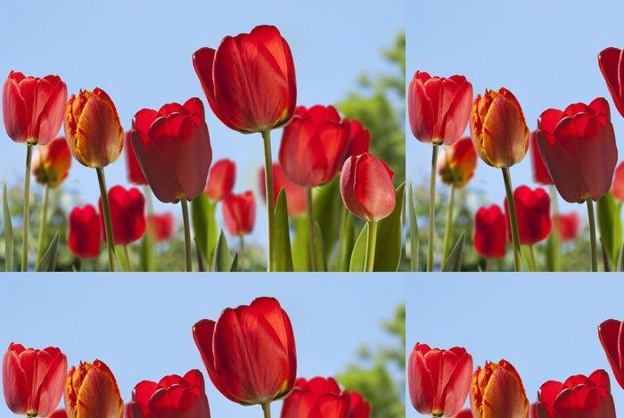 Tapeta Pixerstick Souvislosti s tulipány - Témata