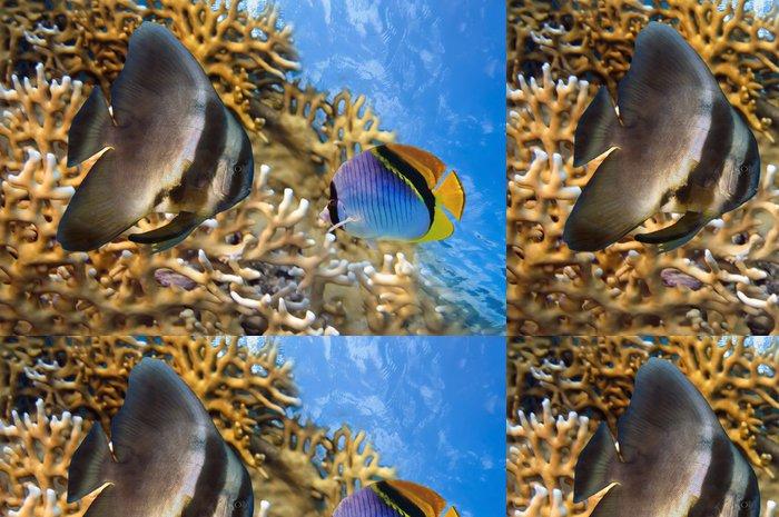 Tapeta Pixerstick Spadefish v Rudém moři - Vodní a mořský život