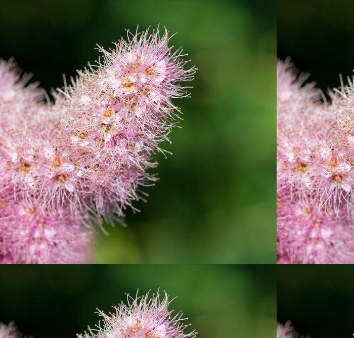 Tapeta Pixerstick Spierstrauchblüte (Spiraea salicifolia) Macroaufnahme - Květiny