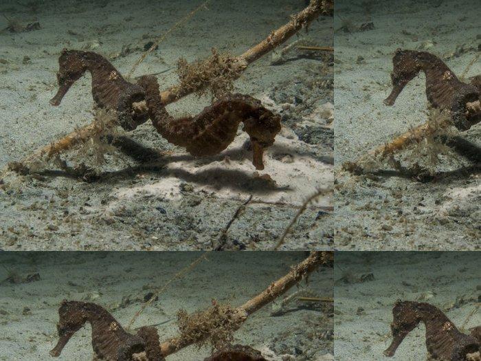 Tapeta Pixerstick Spiny Seahorse - Hippocampus hystrix - Vodní sporty