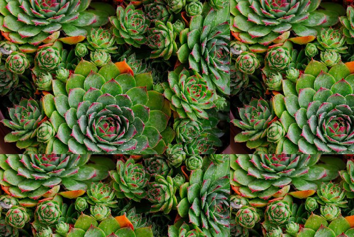 Tapeta Pixerstick Společné netřesk - Rostliny