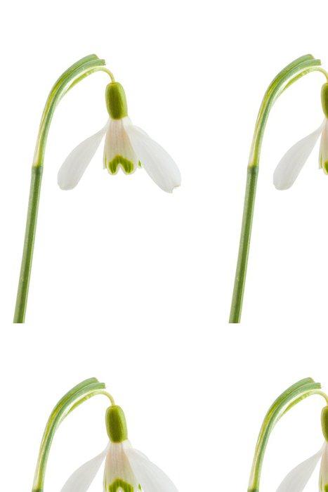 Tapeta Pixerstick Společné sněženka - Květiny