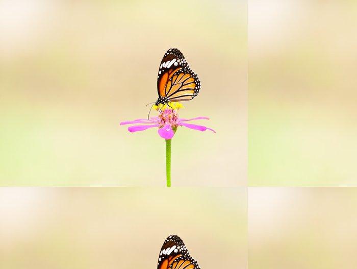 Tapeta Pixerstick Společné tygr motýl zavřít - Témata