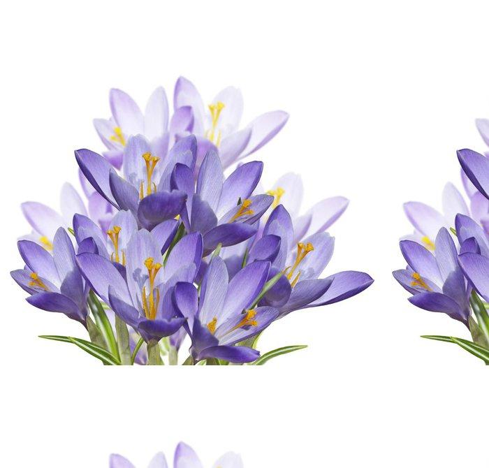 Tapeta Pixerstick Spring Crocus květiny - Květiny