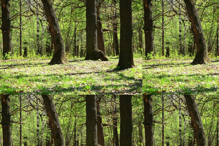 Tapeta Pixerstick Spring Oak Grove - Roční období
