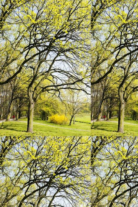 Tapeta Pixerstick Spring Park - Lesy