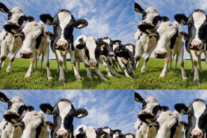 Vinylová Tapeta Stádo zvědavých krav - Jiné pocity