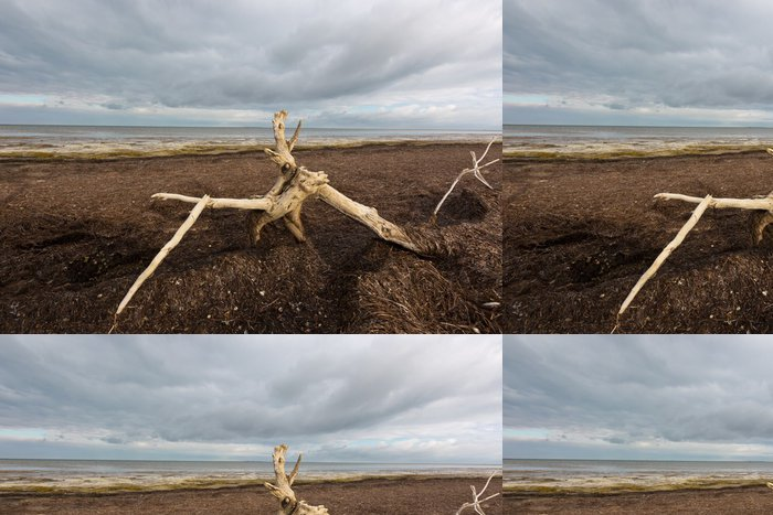 Tapeta Pixerstick Starý strom na mrtvého moře - Stromy