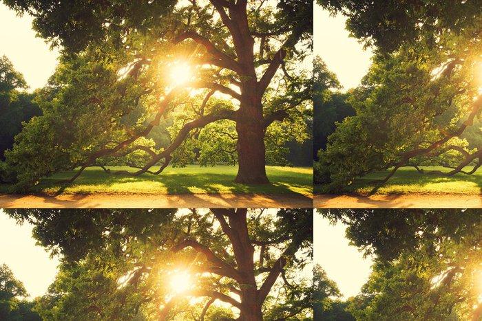 Vinylová Tapeta Starý velký strom - Roční období