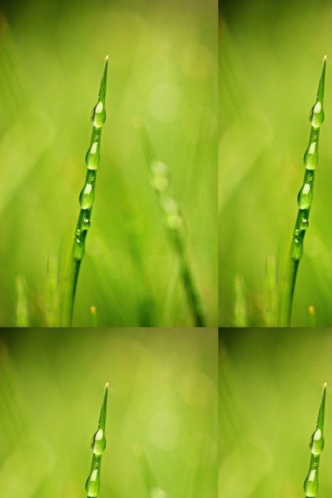 Tapeta Pixerstick Stéblo trávy se kapky rosy proti zeleným pozadím - Rostliny