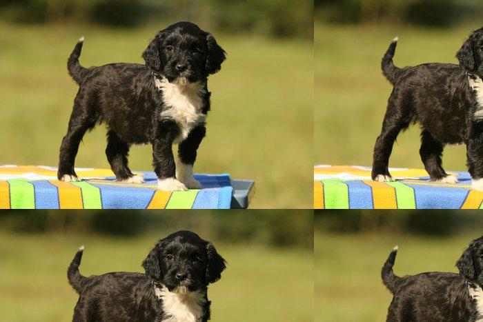 Tapeta Pixerstick Štěně Portugalský vodní pes - Savci