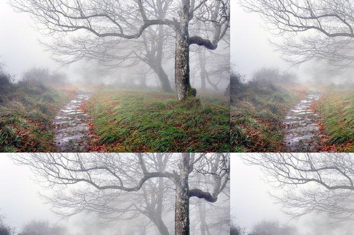 Tapeta Pixerstick Stezka v lese s tajemnými stromy - Témata