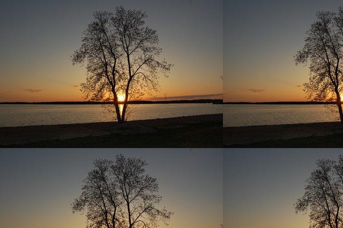 Tapeta Pixerstick Stmívání - Stromy