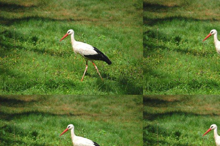 Tapeta Pixerstick Storch - Ptáci