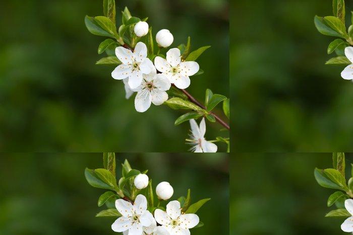 Tapeta Pixerstick Strom s krásnými bílými květy - Roční období