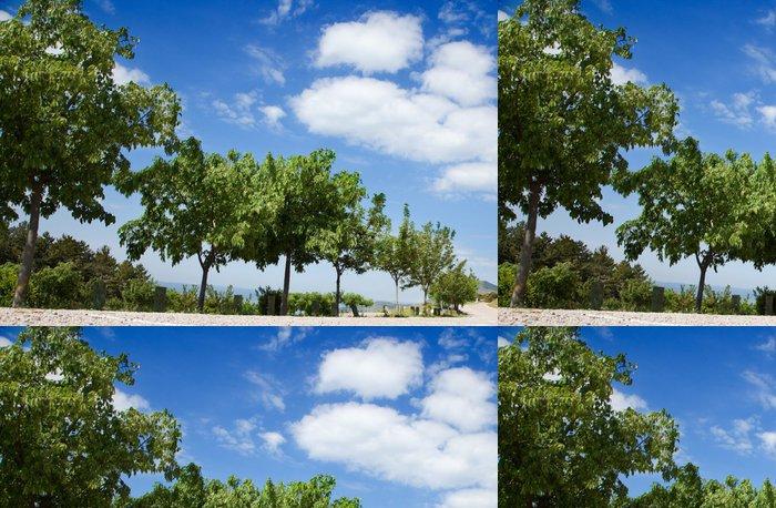 Tapeta Pixerstick Stromy lemovaná proti obloze - Roční období