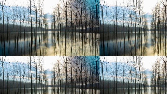 Tapeta Pixerstick Stromy v zrcadle - Přírodní katastrofy