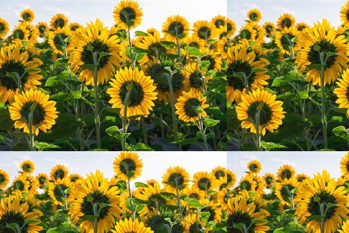 Tapeta Pixerstick Sunflowers - Město