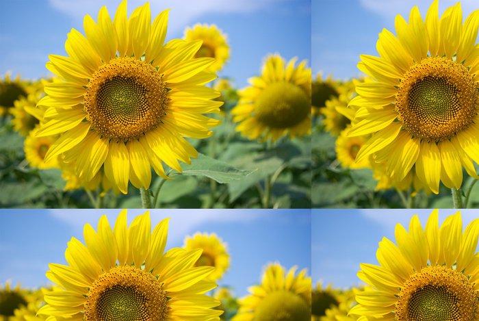 Tapeta Pixerstick Sunflowers - Zemědělství