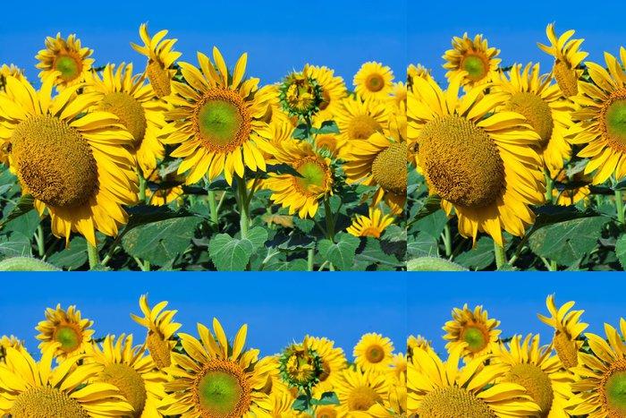 Vinylová Tapeta Sunflowers - Město