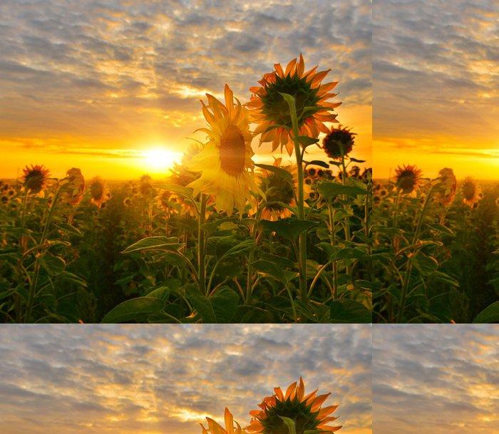Tapeta Pixerstick Sunflowers - Témata
