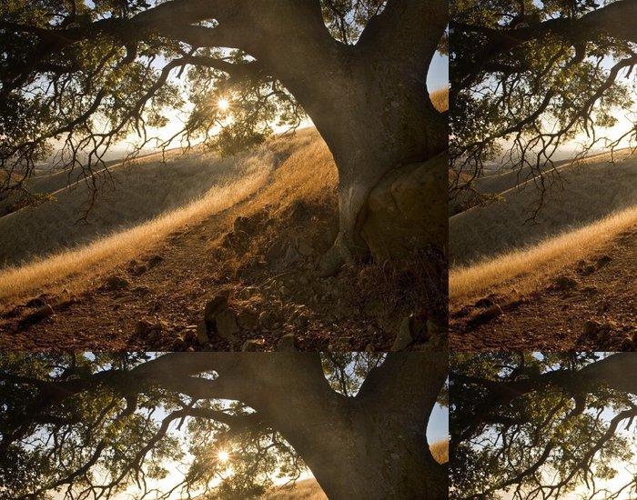 Tapeta Pixerstick Sunny cesta pod dubem na idylickém svahu ve střední Kalifornii - Venkov