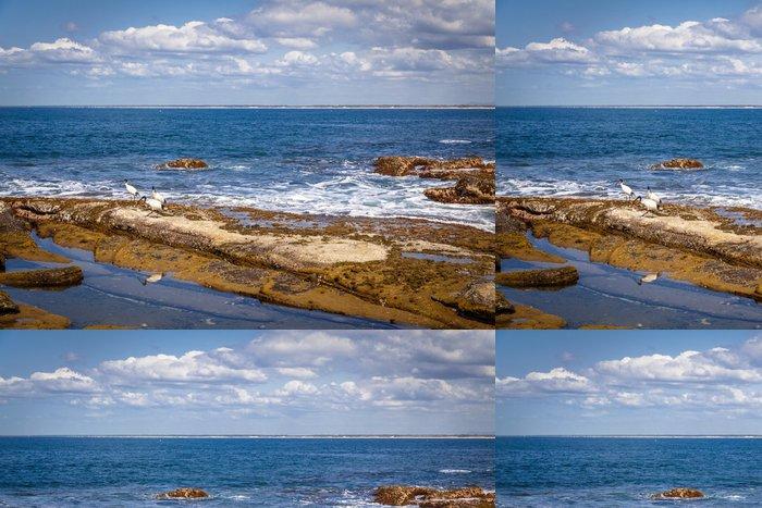 Tapeta Pixerstick Sunshine Coast Queensland pobřeží - Oceánie