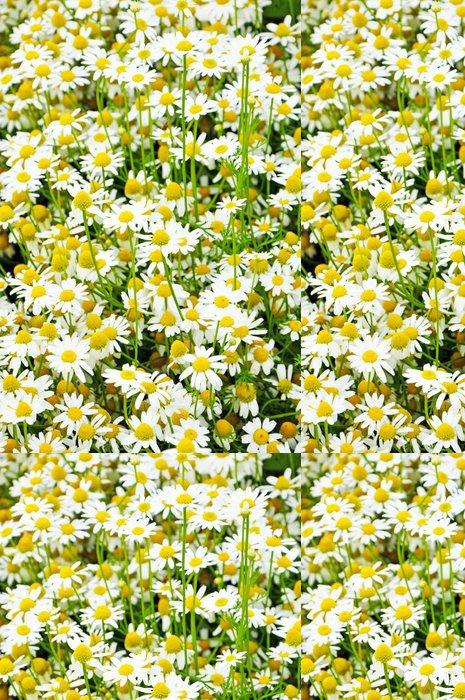 Vinylová Tapeta Světlé pozadí z chamomiles - Květiny
