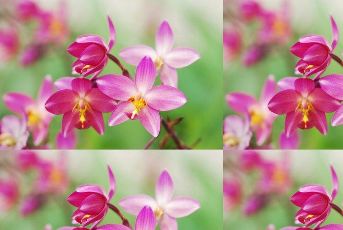 Tapeta Pixerstick Světle růžová krásné orchideje - Květiny