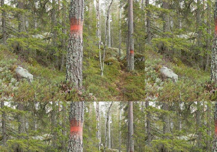 Vinylová Tapeta Takto označené stromy ve staré přirozeného lesa - Lesy