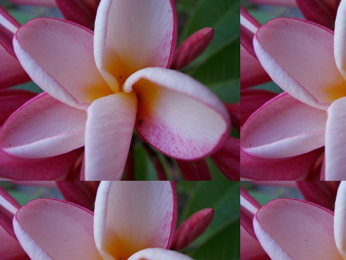 Tapeta Pixerstick Tempelblume - Květiny