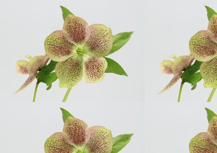 Tapeta Pixerstick Ten Ren Rose Helleborus - Květiny