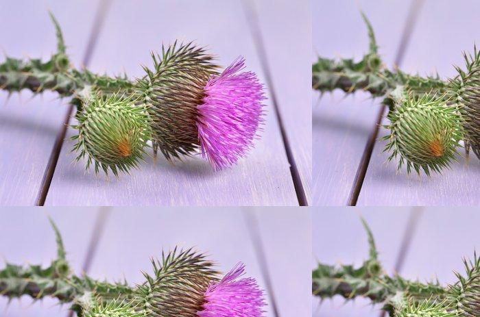 Vinylová Tapeta Thistle květina na dřevěném pozadí - Květiny