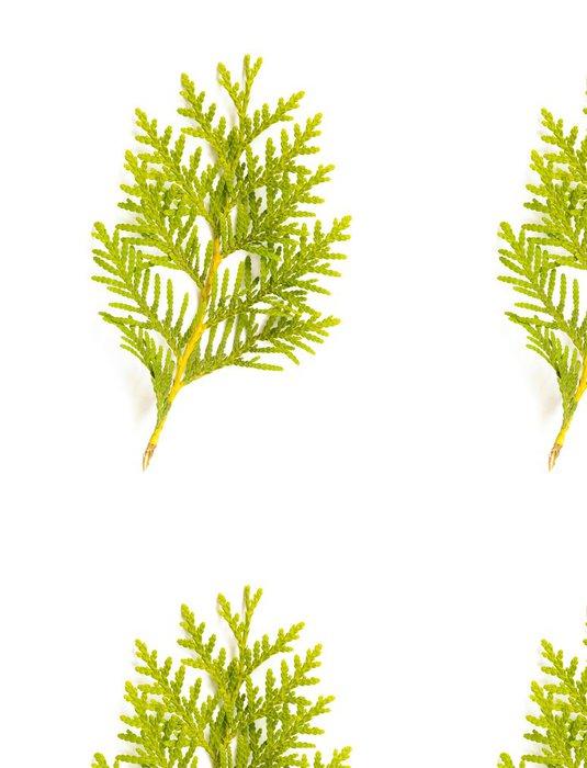 Tapeta Pixerstick Thuja (Cedar) Leaf - Stromy