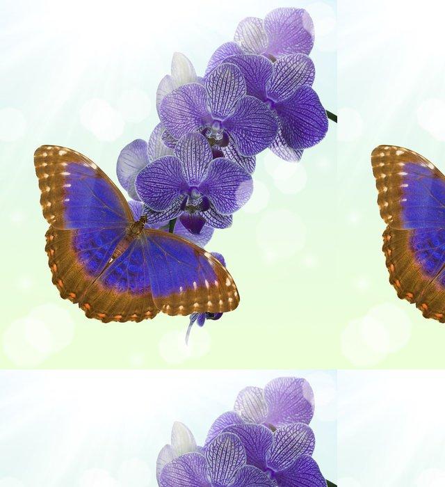 Vinylová Tapeta Tmavě modrý motýl a květ orchideje na světlém pozadí - Ostatní Ostatní