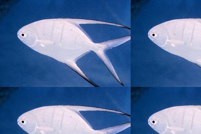 Tapeta Pixerstick Trans ryby - Vodní a mořský život