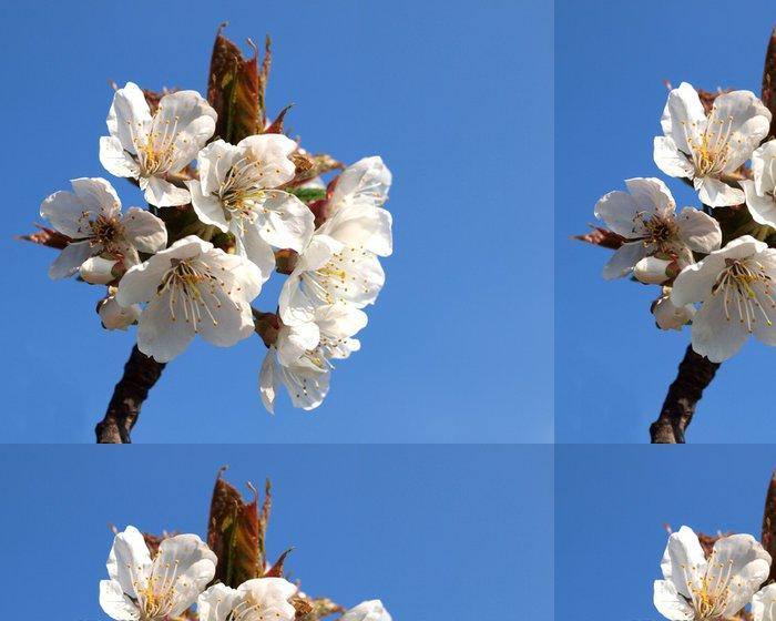 Tapeta Pixerstick Třešeň květy - Stromy
