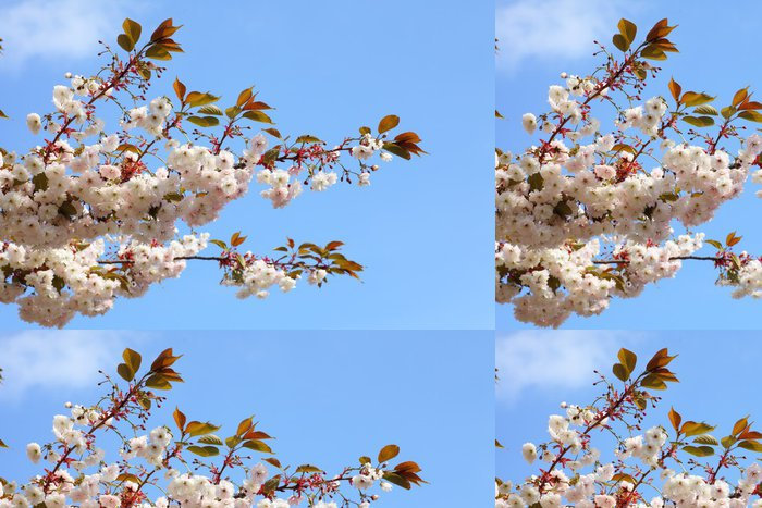 Tapeta Pixerstick Třešňový květ v modré obloze - Roční období