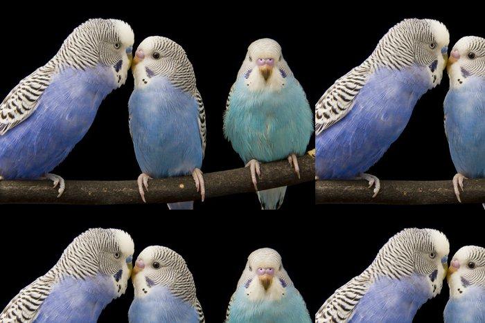 Tapeta Pixerstick Tři andulky jsou v hnízdiště - Ptáci