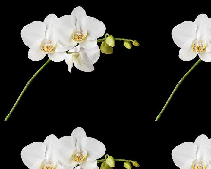 Vinylová Tapeta Tři dny stará bílá orchidej na černém pozadí. - Témata