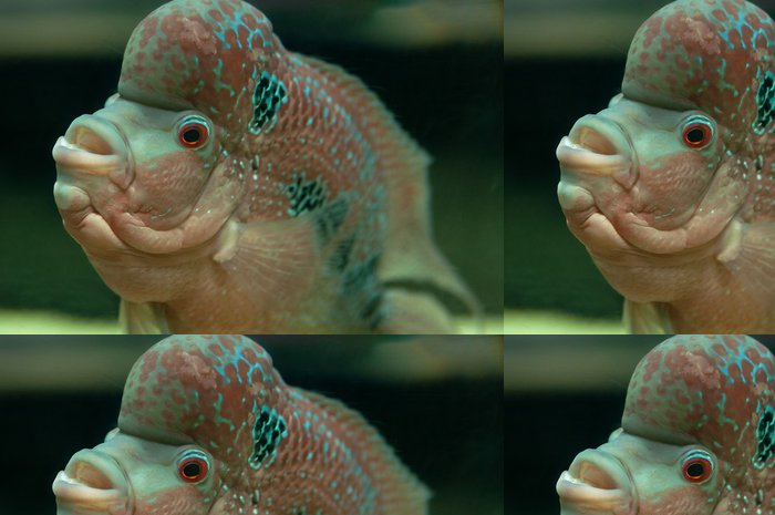 Tapeta Pixerstick Tropické ryby - Vodní a mořský život