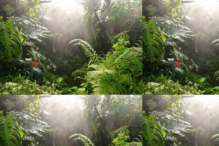 Tapeta Pixerstick Tropický deštný prales. - Příroda a divočina