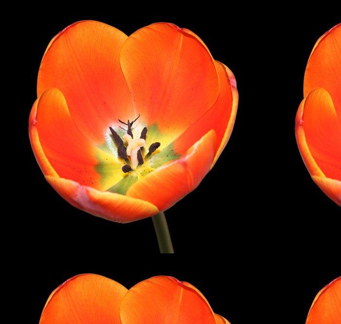 Tapeta Pixerstick Tulipán bud - Témata