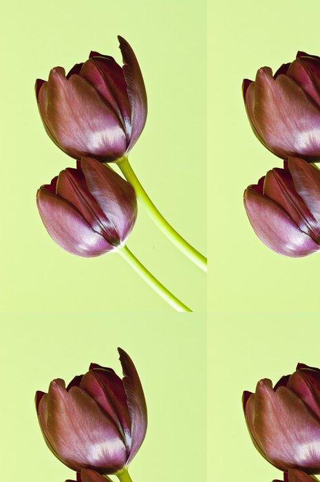 Tapeta Pixerstick Tulipan - Domov a zahrada