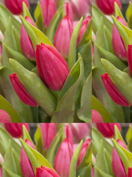 Tapeta Pixerstick Tulipan - Štěstí