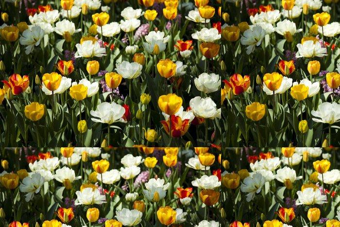 Tapeta Pixerstick Tulipány pozadí - Květiny