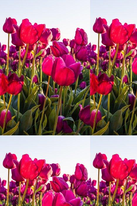 Tapeta Pixerstick Tulipány při východu slunce - Domov a zahrada