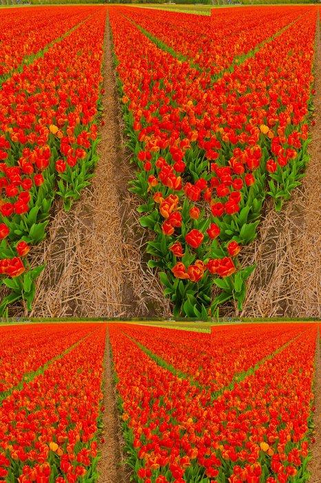 Tapeta Pixerstick Tulips - Roční období