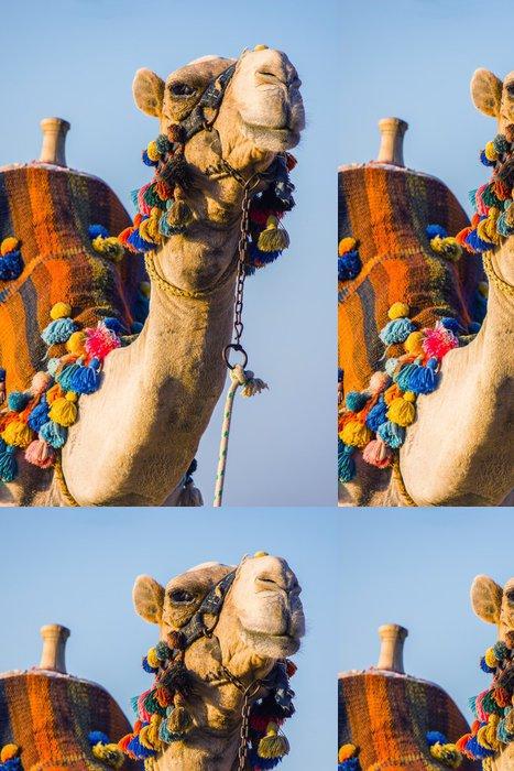 Tapeta Pixerstick Ústí africké velblouda - Savci