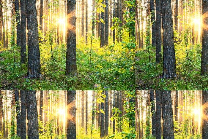 Tapeta Pixerstick V lesích. - Lesy